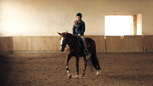 Hillsborough County Equestrian Properties