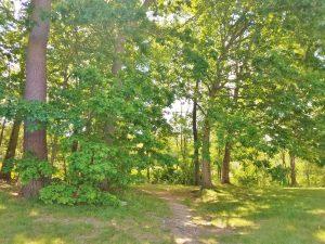 11-307 Bartemus Trail, Nashua NH 03063